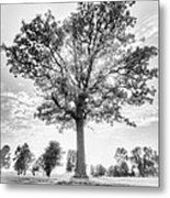 Oak Tree Bw Metal Print