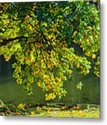 Oak Tree By The Pond - Featured 3 Metal Print