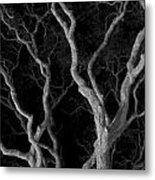 Oak Tree Canopy Under A Night Sky Metal Print