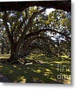 Oak Trees   #5794 Metal Print