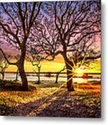 Oak Trees At Sunrise Metal Print