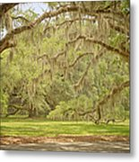 Oak Trees Draped With Spanish Moss Metal Print