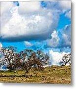 Oaks And Clouds Metal Print