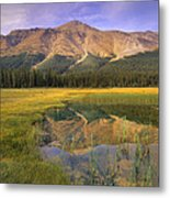 Observation Peak And Coniferous Forest Metal Print