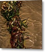 Ocean Bouquet 4 Metal Print