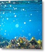Ocean Garden Metal Print by Stelios Kleanthous
