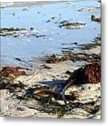 Ocean Life On The Beach Metal Print