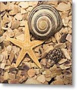 Ocean Treasure Trove Metal Print