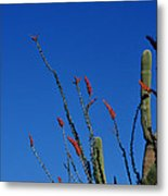 Ocotillo And Saguaro Metal Print