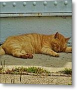 Ocracoke Cat 8/04 Metal Print