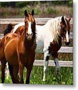 Ocracoke Ponies Metal Print