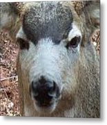 October Deer Iv Metal Print
