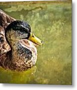 October Duck Metal Print by Marty Koch