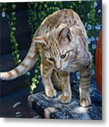 October Kitten #2 Metal Print