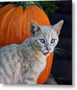 October Kitten #3 Metal Print