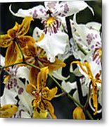 Gold And White Orchids Metal Print