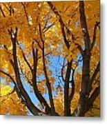 October Sky 1 Metal Print