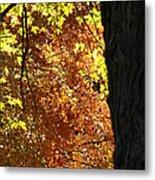 October Tree Metal Print