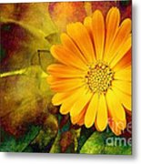 October Zinnia Metal Print