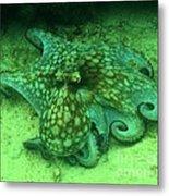 Octopus In The Sand Metal Print