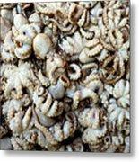 Octopuses Metal Print