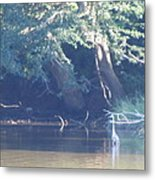Ode The Great Blue Heron Metal Print