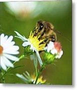Of Bee And Flower Metal Print