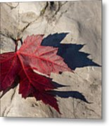Oh Canada Maple Leaf Metal Print