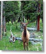 Oh Dear I See A Deer Metal Print