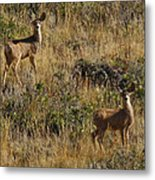 Oh Deer Metal Print by Charles Warren