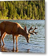 Oh Deer Is That Me Metal Print