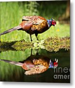 Oh My What A Handsome Pheasant Metal Print