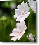 Oh So Pretty Musk Mallow Metal Print