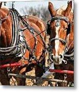 Ohio Draft Horses Metal Print