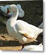 Oil Painting - A Duck Making A Pose Metal Print