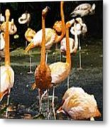 Oil Painting - A Number Of Flamingos With Their Heads Held High Inside The Jurong Bird Park Metal Print