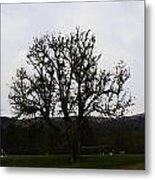 Oil Painting - An Old Tree In The Middle Of A Garden And Playground Metal Print