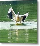 Oil Painting - Pelican Flapping Its Wings Metal Print