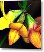 Yellow And Orange Trefoil  Metal Print