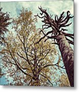 Old And Naked Metal Print