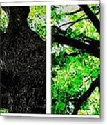 Old Barks Diptych - Deciduous Trees Metal Print
