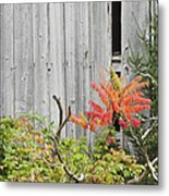 Old Barn In Fall Metal Print by Keith Webber Jr