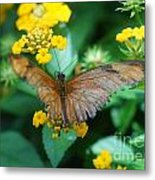 Old Butterfly Metal Print