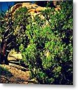 Old Desert Tree Number Two Metal Print