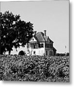 Old Farmhouse Surrounded By Cotton Metal Print