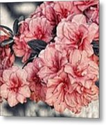 Old Fashion Azalea Metal Print