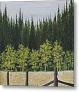 Old Fences Metal Print