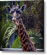 Old Funny Face Metal Print