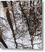 Old Growth Cypress Reflection Metal Print