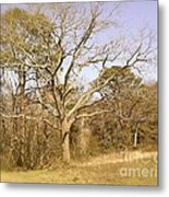 Old Haunted Tree Metal Print